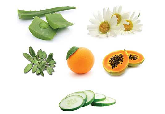 Aloe Leaf, Chamomile, Sage, Papaya, Cucumber and Orange Extracts help moisturize and nourish the skin