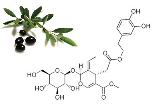 Oleuropin, derived from olive leaves to help reduce the formation of Lipofuscin pigment