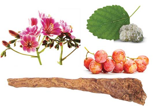 Saxifrage Extract, White Mulberry Extract, Grape Extract and Skullcap Root Extract